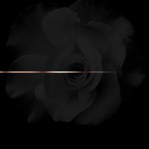 Rose Weed